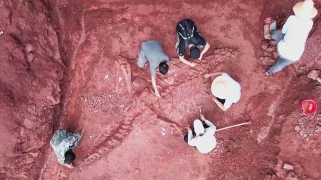rangka dinosaur berusia 180 juta tahun ditemui di china