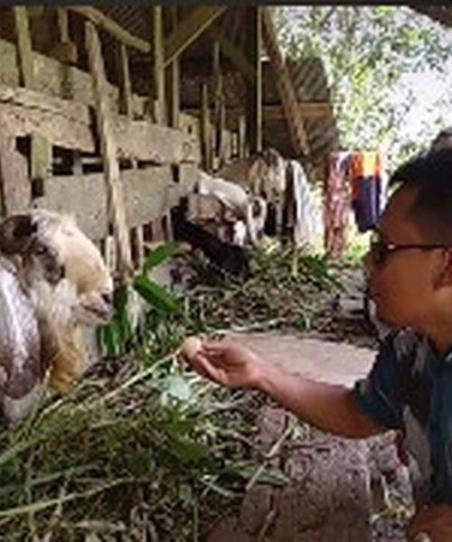 seakan faham bahasa manusia, kambing viral kerana bijak bertutur dengan tuannya!