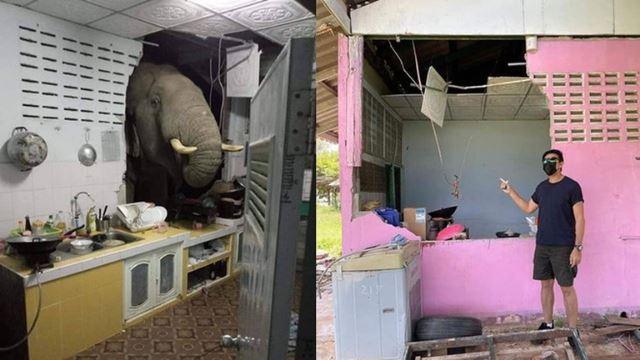 kelaparan, gajah ini tembus dinding rumah penduduk kerana ingin cari makanan
