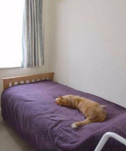 lelaki terkejut nampak kucing sendiri dalam iklan rumah untuk dijual milik jiran