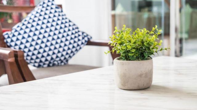 serikan rumah korang dengan 5 tumbuhan yang mudah dijaga ni