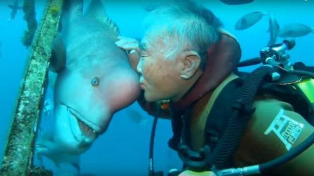 Lelaki Dan Ikan Ini Sudah Berkawan Hampir 25 Tahun Lamanya. Friendship Goals!