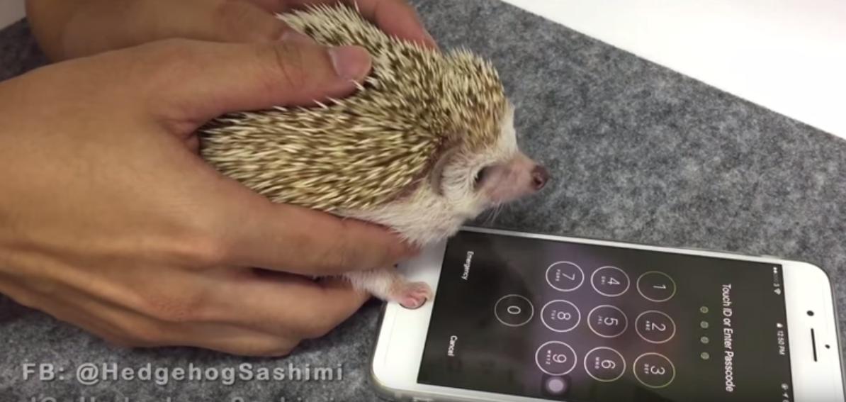 [Video] Ini Cap Jari Untuk Buka Kekunci Telefon Yang Paling Selamat Di Dunia