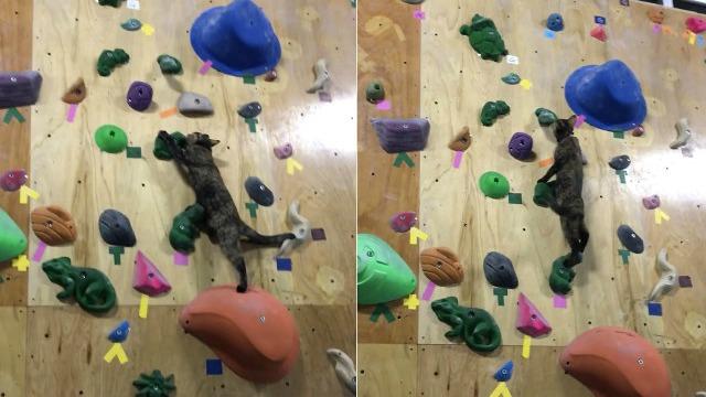 Kucing Moden Mana Ada Main Bola, Dia Pergi Rock Climbing Dah Sekarang Ni!