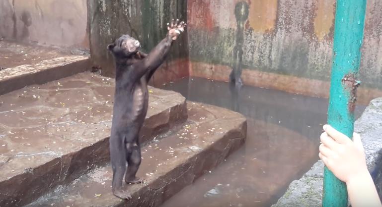 [Video] Mana Letaknya Sikap Perikemanusiaan Mereka Sampai Sanggup Seksa Haiwan Macam Ni