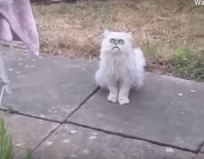 Lelaki Dakwa Instagram Padam Videonya Kerana Ia Memalukan Imej Kucing