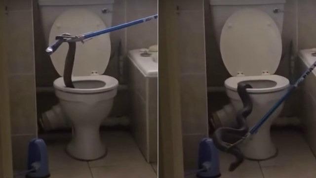 [Video] Selamat Buang Air Di Ruang Shower, Ada Ular Cobra Rupanya Dalam Lubang Tandas!