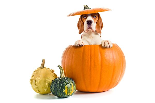 家里狗狗都只吃狗饼?还有这些食物也能吃!