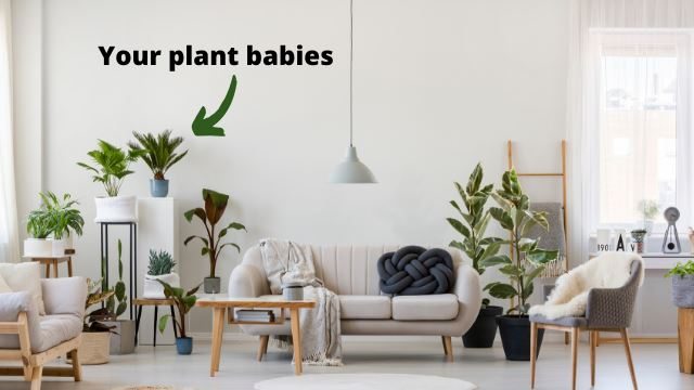 4 easy ways to turn your space into a mini-forest paradise if you're a plant person