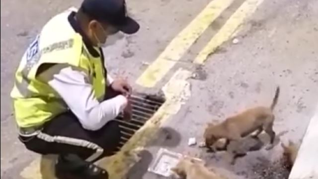 Kind-Hearted Abang Polis Praised For Feeding Stray Puppies