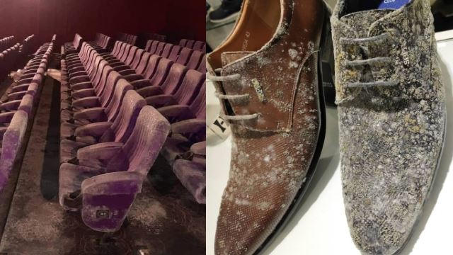 Two Months Of MCO, Leather Goods And Cinema Seats Now Covered In Mold