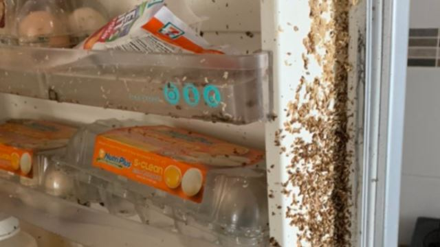 Netizen Came Back To Maggot-Infested Fridge After 2 Months Of MCO