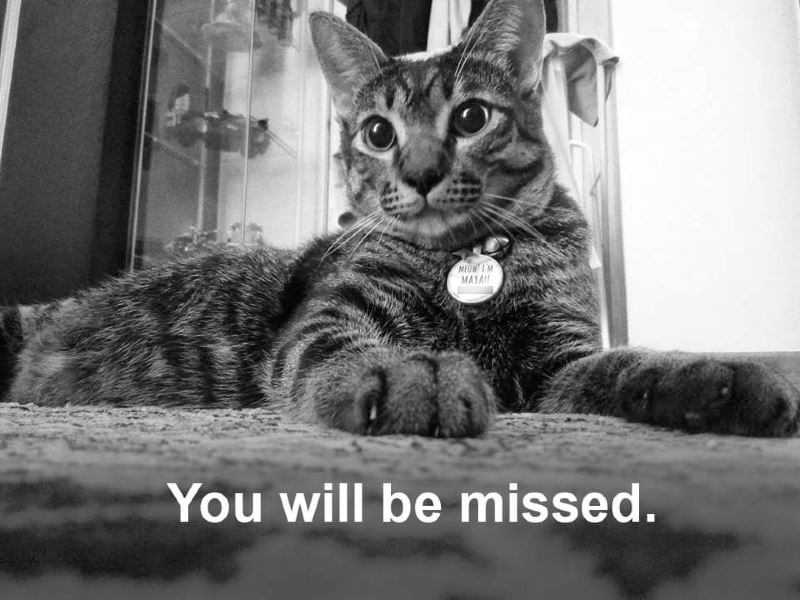 a bittersweet story of mayau the cat