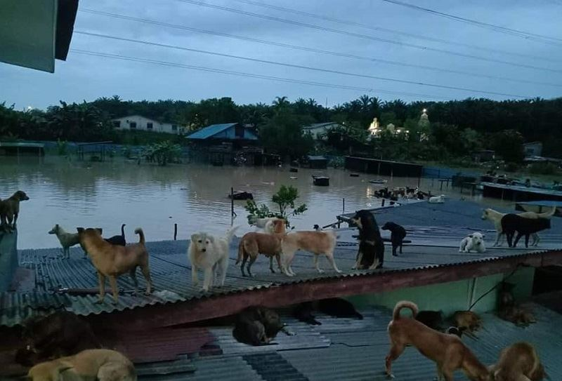 54 dogs at a seremban shelter perished in negeri sembilan floods