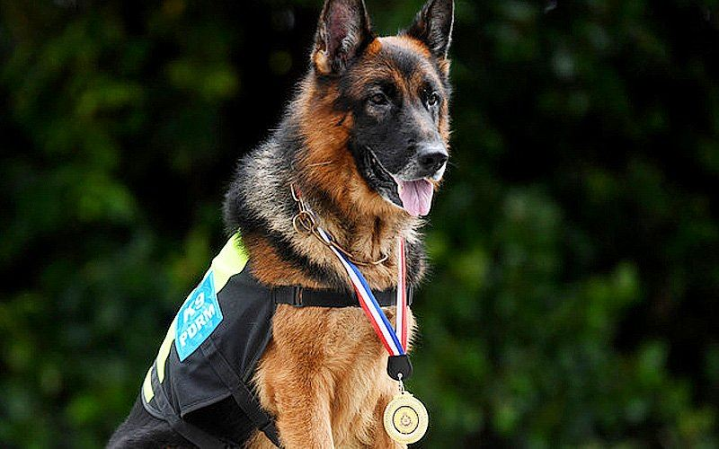 first dog to receive pahang police appreciation award!