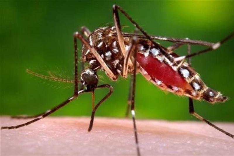 beware of the chikungunya outbreak