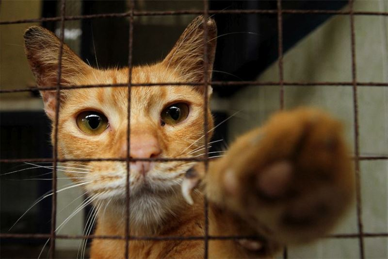 stray cats at national museum to be put down if there are no adopters