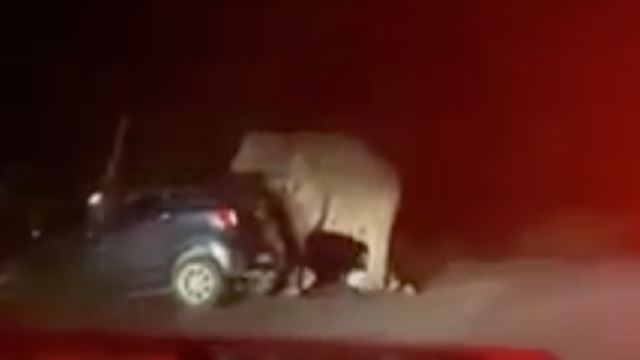 A Stressed Out Elephant Stomps On Vehicle In Perak After Being Honked At