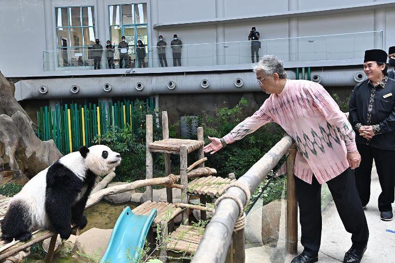 ydp agong meets panda bears at zoo negara!