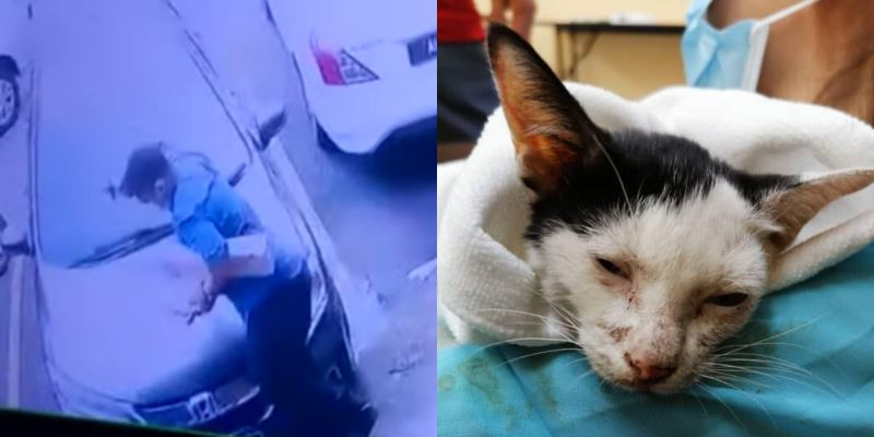 man who violently threw a cat on the floor is questioned by police