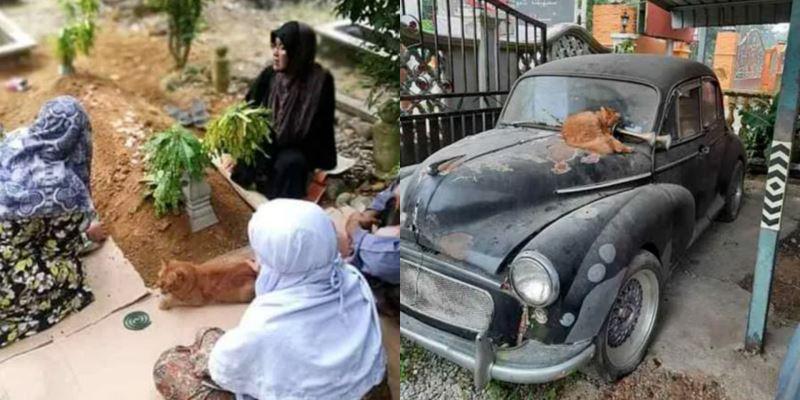 cat visits owner