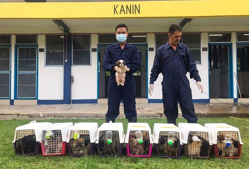 customs foil attempt to smuggle 23 dogs into the country
