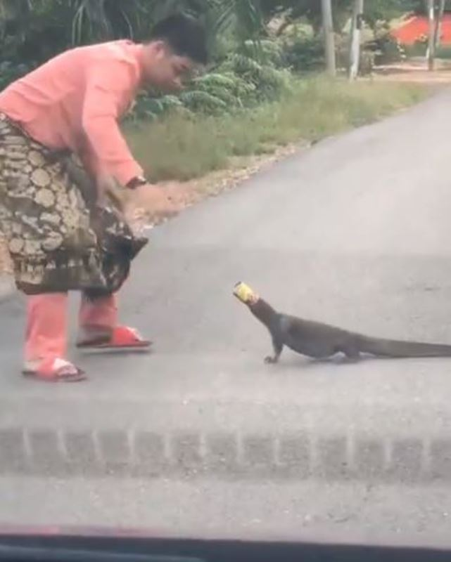 watch how this brave man rescued a monitor lizard with trash stuck on its head