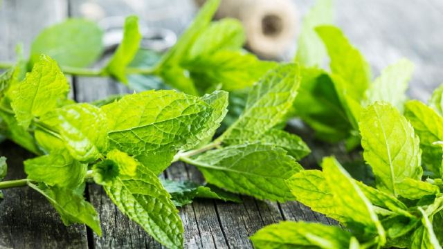 Are Mint Leaves Good For You? Here Are The Pros And Cons!