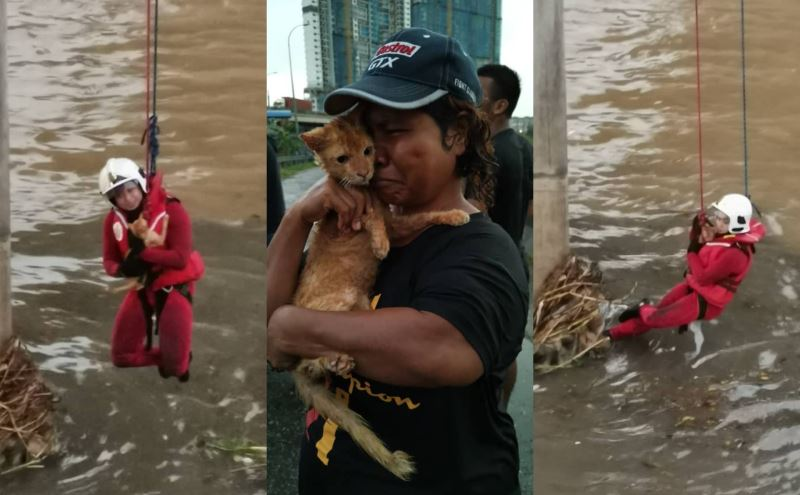 abang bomba saves cat stuck in a pile of drifting rubbish