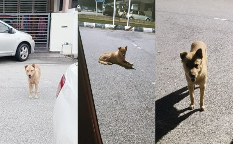 malay woman shares how she overcome her fear of dogs