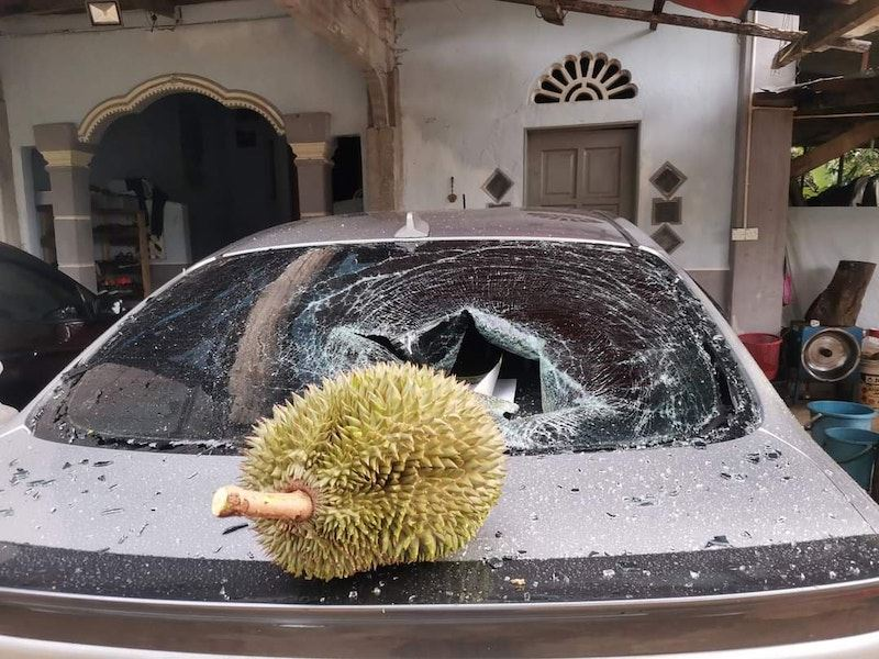 man receives help from minister after rm500 durian fell onto his car and broke the rear window