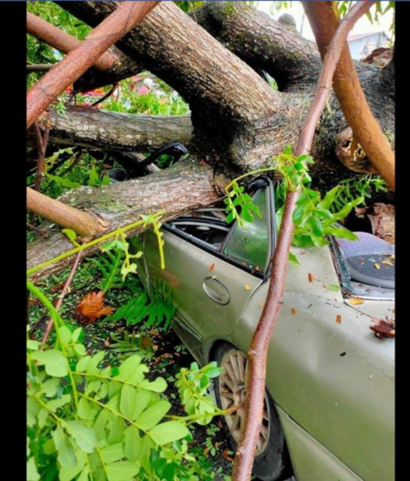 driver killed as fallen tree crushes car in penang