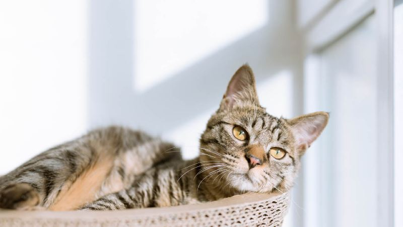 do cats actually have nine lives? here's the truth behind the myth!