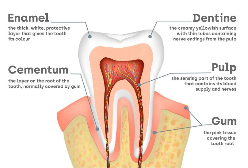 ouch, sakit gigi! here are some of the possible causes of toothache