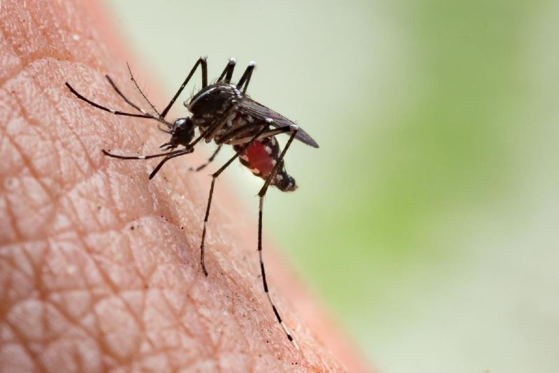 here's why mosquitoes bite some people more than others