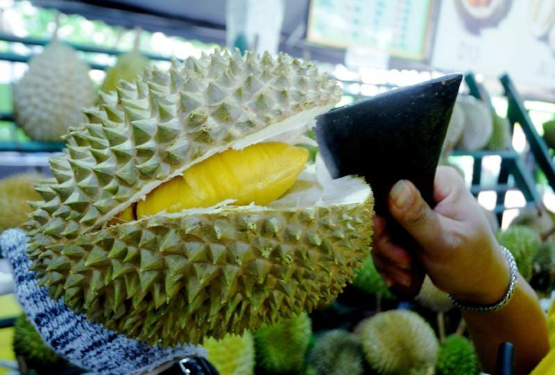 it's durian season! here are the types of durian you can find in malaysia