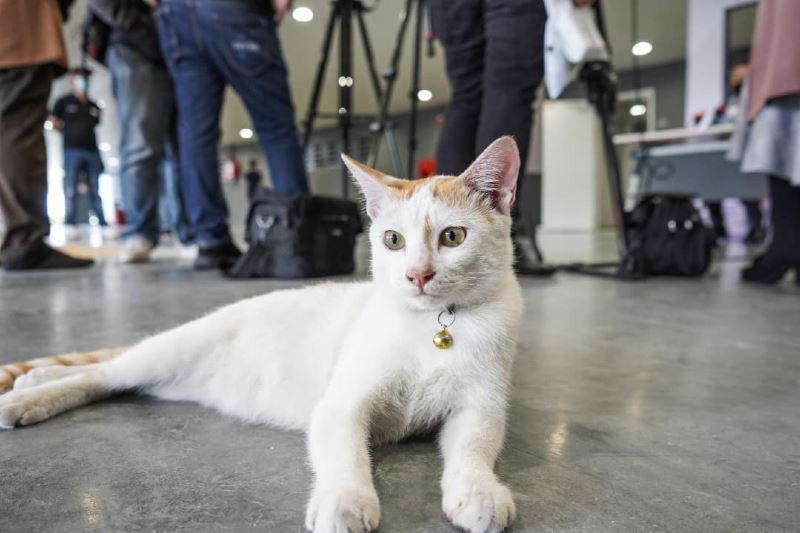 adorable cat takes over prasarana's press conference!