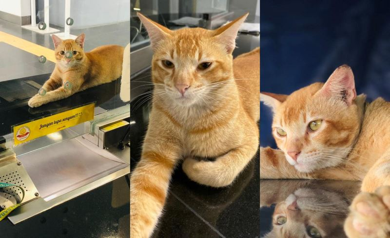 injured oyen receives help from netizen after its story fighting over a female cat went viral