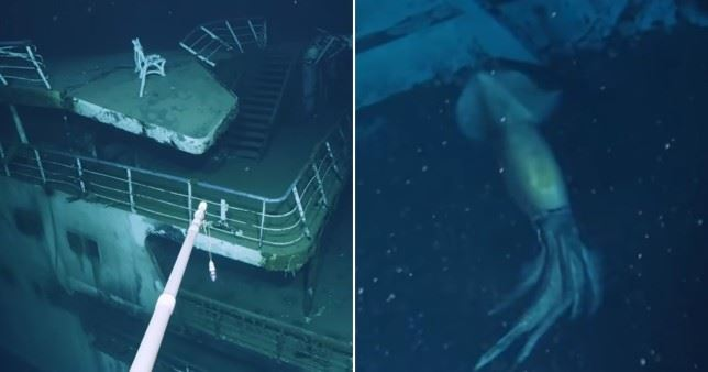 """photos of """"larger than humans"""" purpleback squid captured by deep-sea research crew"""