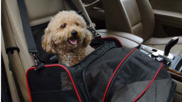 5 Tips To Pooch-Proof Your Road Trip