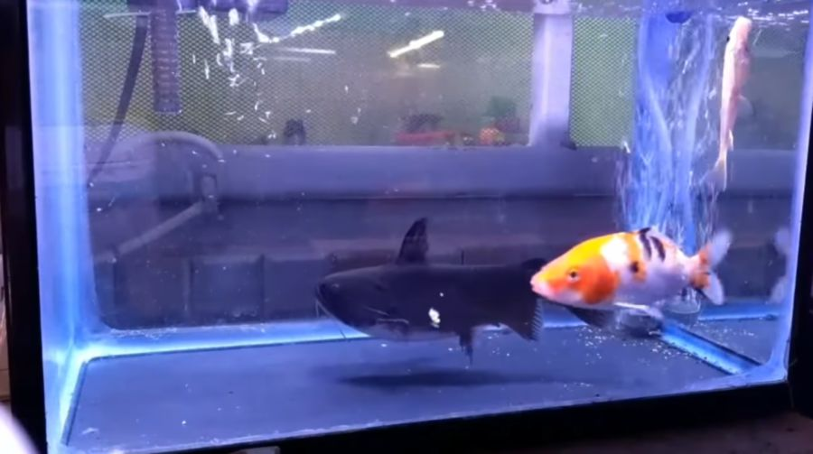 We?ve Never Seen A Video Of 2 Fishes More Traumatising Than This