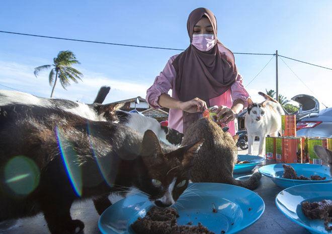 pupuk rasa sayang haiwan, setiap hari beri 100 kucing jalanan makanan